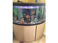 350 l fluvial fish tank with filter and fish