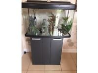 Large fish tank with ornaments and stand!