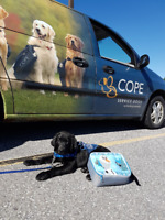 Volunteer Driver - Transport for Service Dogs-in-training