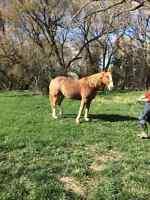Amazing kids horse