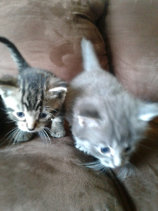 Beautiful kittens ready to go