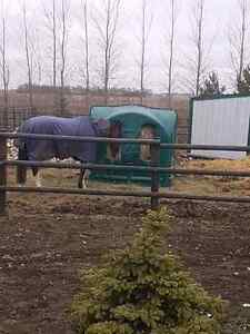 Outdoor Horse Boarding