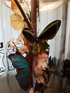 REAL BUTTERFLY TRI-LIGHT LAMP WITH NIGHT LIGHT/Price Drop Cambridge Kitchener Area image 6