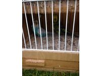 Wonderful budgies with very nice wooden cage