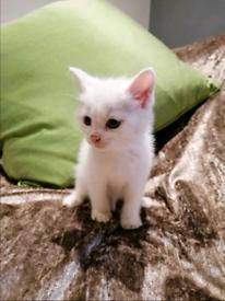 Beautiful Cross Kittens