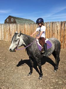Children's Pony For Sale