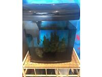 45 litre fish tank with filter, heater and ornaments