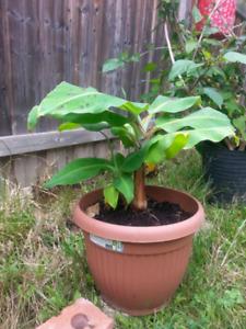 Perennials and indoor plants