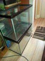plusieurs aquariums, et terranium, filtreurs