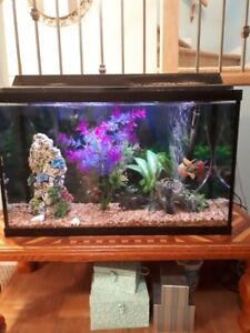 Fish Tank, Live Fish and all accesories 30 Gallon