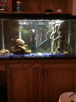 32G FISH TANK+ ALL ACCESSORIES WITH 204 Fluval filter