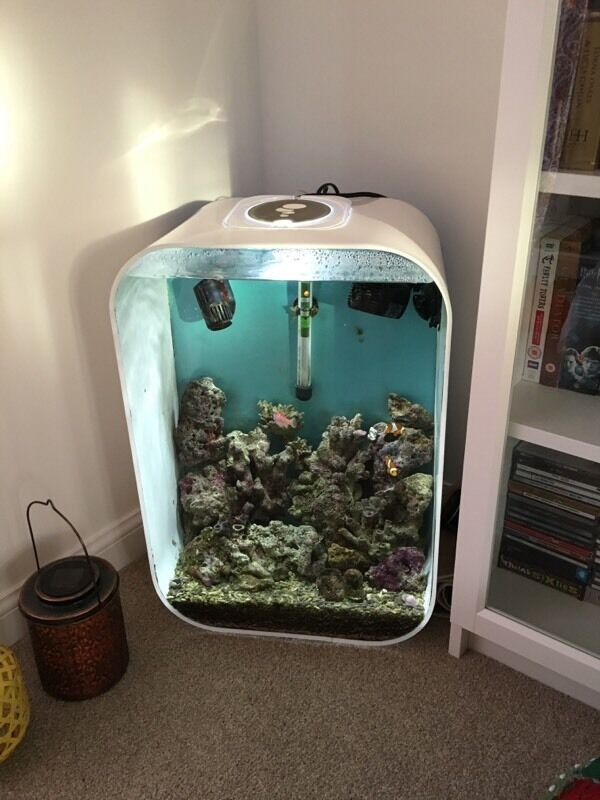Biorb life 60 litre marine fish tank in exeter devon for Decoration aquarium 60 litres