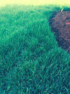 SOD -EXPERTS SOD ONLY0.90 BEFORE MAY 20th