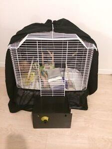 Cage d'oiseaux tout équipée !  Saguenay Saguenay-Lac-Saint-Jean image 2