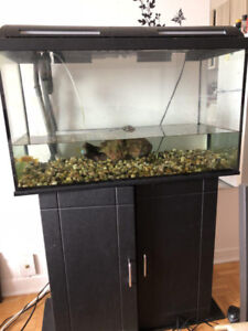 *Incredible Price* Lovely aquarium (tank and stand) with fishes