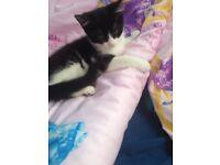 Kitten 😻😻😻😻😻😻😻😻