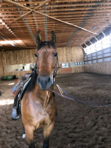 Qh Mare Dee