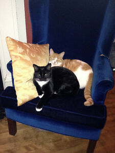 2 neutered declawed male (brothers) cats free to a good home
