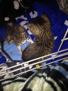 Kittens 4 sale☺️