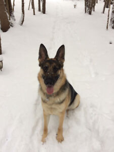 Dog Sitting in Havelock area