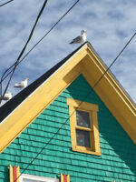 Registered  House-Sitter Seeking Winter Position.