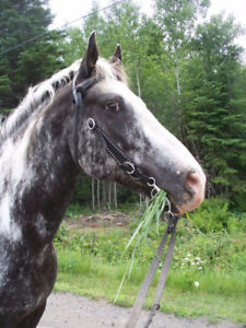 Looking for Board for my 18 year old Gelding....
