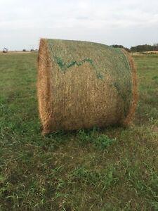 Hay bales for sale  Regina Regina Area image 2
