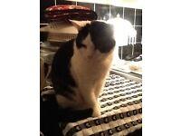 Lost cat called Angel in Eaton Norwich nr4