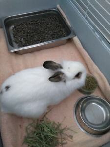 2 Rabbits Looking for Homes