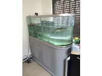 Terrapin + large curved aquarium with storage, cover included