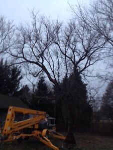 Tree Service/Removal Kingston Kingston Area image 3