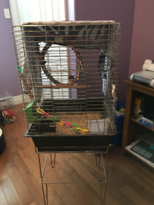 Zebra Tailed Finches, and cages