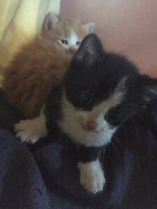 4 Kittens To a Good Home