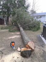 Need trees cut?  I offer FREE ESTIMATES