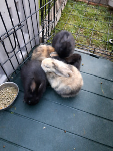 Rex rabbits for sale .... call only...