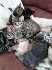 5 kittens ready for their forever homes!