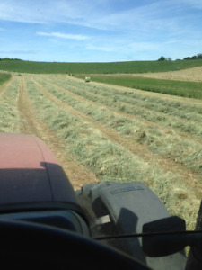 Hay for Sale - 1st Cut