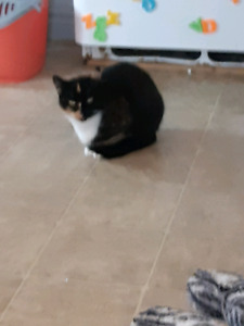 Chatte 2 ans phoebe!