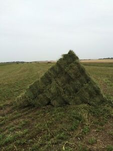 Hay for sale - second cut alfalfa square bales