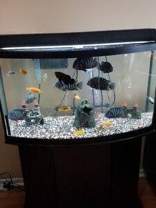 55 Gallon Cichlid Aquarium tank