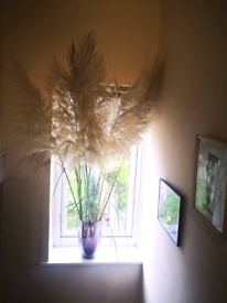 Large pampas grass
