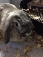Rabbit need a new home
