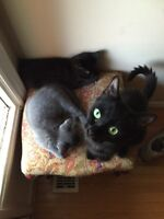 Momma cat and kittens for adoption (free)