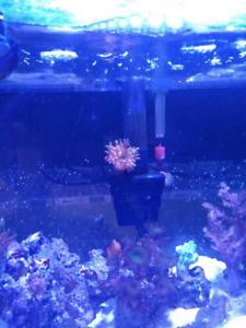 Salt water live coral