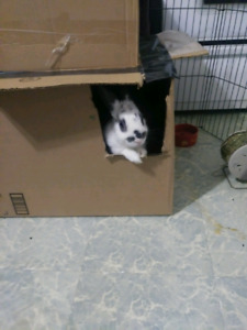 White rabbit with black spots. Best offer starting at $50