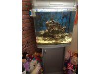 Interpet 98l marine fish tank live rock full set up leds