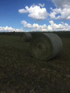 QUALITY HAY FOR SALE - 4X5 ROUNDS - 1ST & 2ND CUT