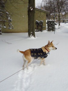 Winter Dog coats, all sizes now $10 each
