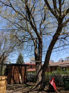 elagage arbre rimouski
