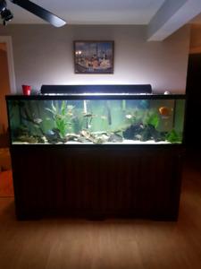 Super belle aquarium a vendre 125 gallon